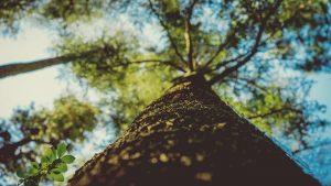 Baumübung Baum Nahaufnahme nach oben