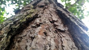 Baumübung Baum sehr nahe Rinde betrachten